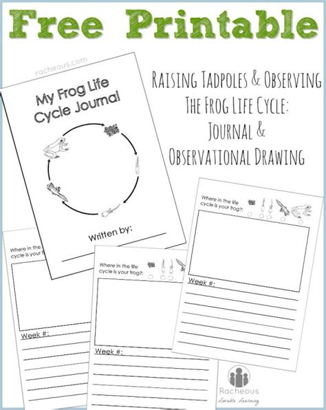 printable observation journal free printable frog life cycle journal raising learning