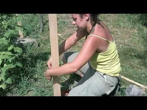 coltivare more in vaso coltivazione dei frutti di bosco il sostegno per i