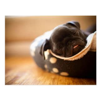 chines pug pug cards zazzle