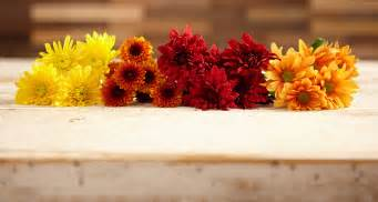 Home Decor Color Trends chrysanthemums a perfect fall flower proflowers blog