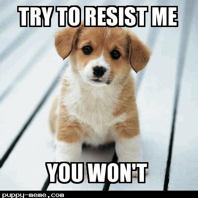 Cute Puppy Memes - cute puppy meme