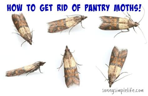 simple how to get rid of pantry moths