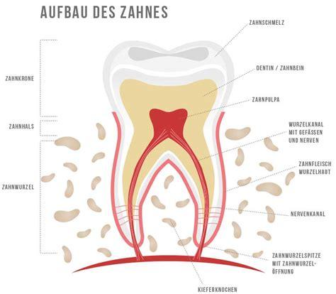 Beschriftung Zahn by Wurzelbehandlung So Schonend Wie M 246 Glich Und Mit