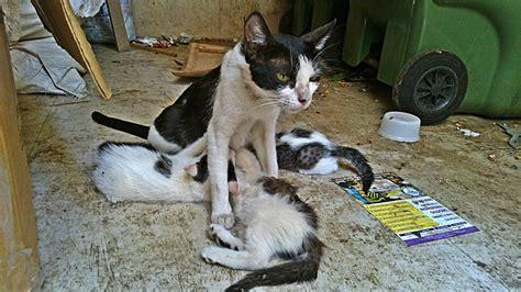 stray cat trap highlands to begin tnr program for feral cats atlantic