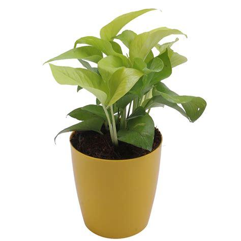 bonsai plants   hyderabad lifestyle news portal