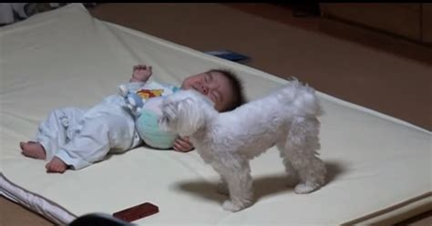 puppy cries when i leave the room look closely at what this does when positioned in front of a baby