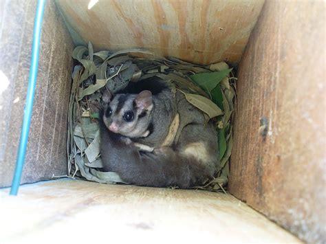 bats in backyard bats in your backyard burke s backyard gogo papa