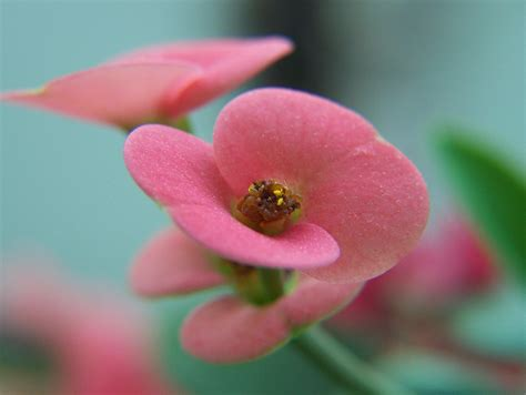 free detailed macro images and stock photos freeimages free macro flower stock photo freeimages