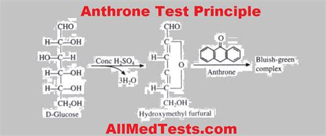 carbohydrates units of measure anthrone test a quantitative analysis of carbohydrates