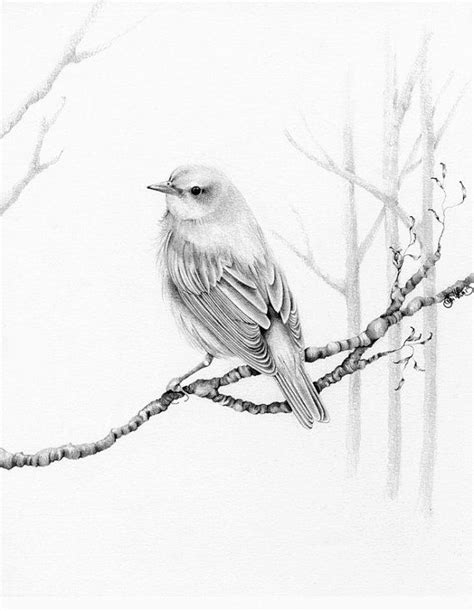 bird art drawing birds pencil drawings pencil drawings of birds