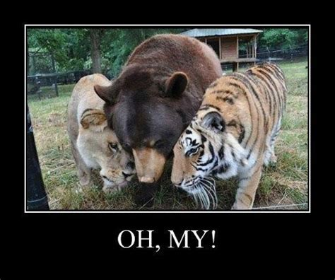 Lions Tigers Bears Oh My by Lions Tigers Bears Oh My My Sides Are Splitting Lol