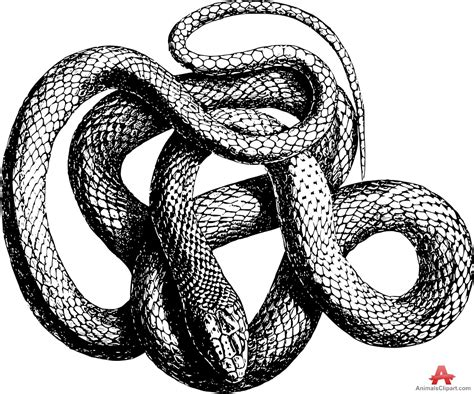 black and white snake tattoos snake with open drawing at getdrawings free