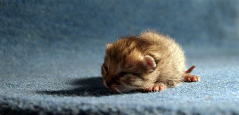 little kitty baby cat pet tiny