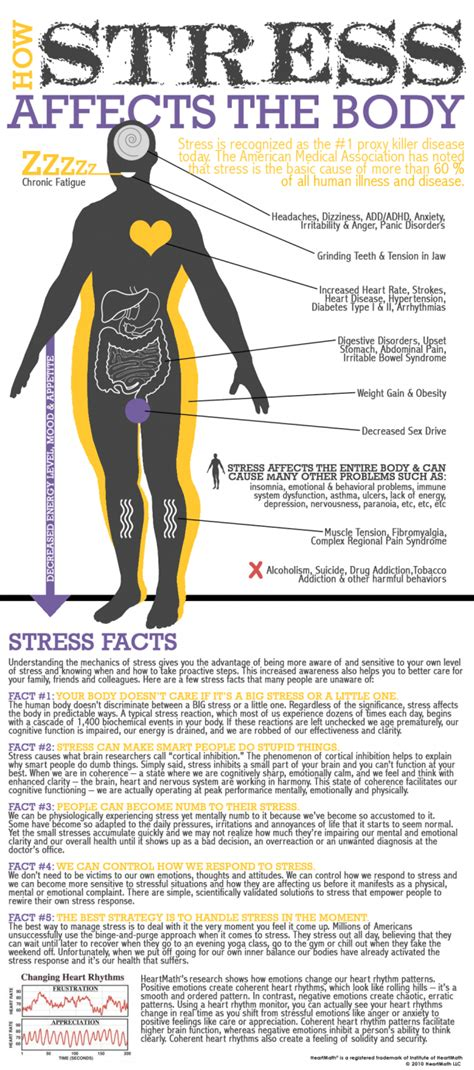 the stress of having a stress on the body daily infographic