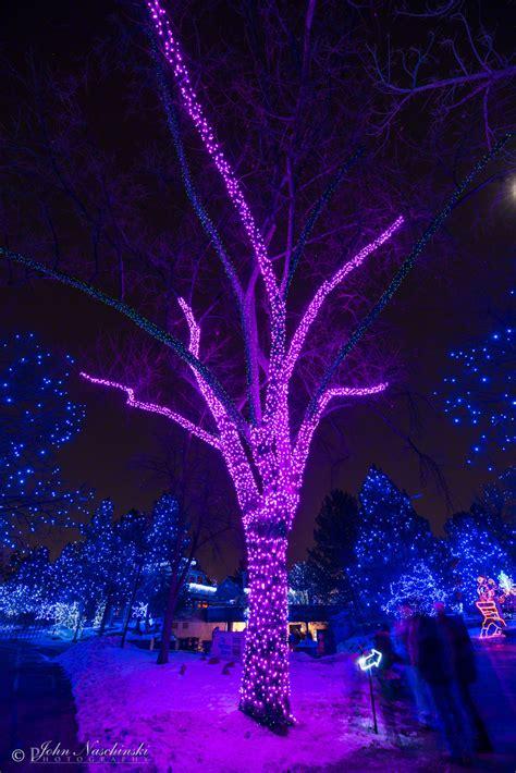 lights denver zoo lights denver zoo 28 images photos denver zoo lights