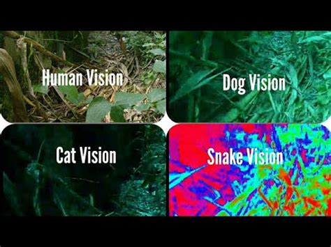 cat color vision animal vision how animal see the world how pet see the