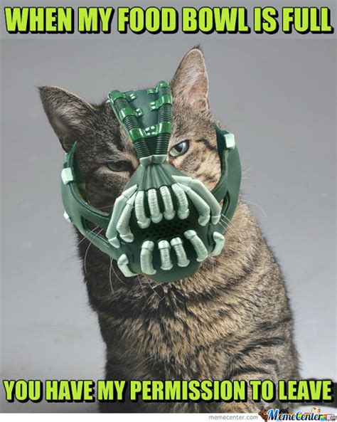 Bane Cat Meme - bane cat memes best collection of funny bane cat pictures