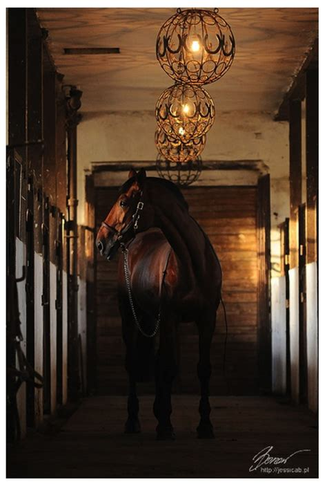 Equestrian Lighting Fixtures with In Esteem Of The Equestrian Inspired Style House Appeal
