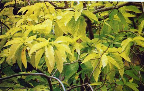 Tanaman Obat Untuk Mata tumbuhan obat dan sains july 2010