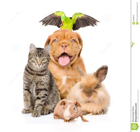 Group Of Pets Together In Front Stock Photo   Image: 55938819
