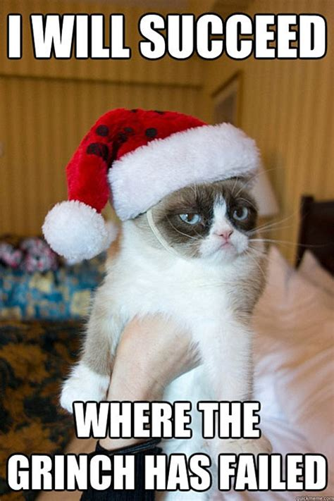 Merry Christmas Cat Meme - steve in a speedo gross friday funny 441 grumpy cat