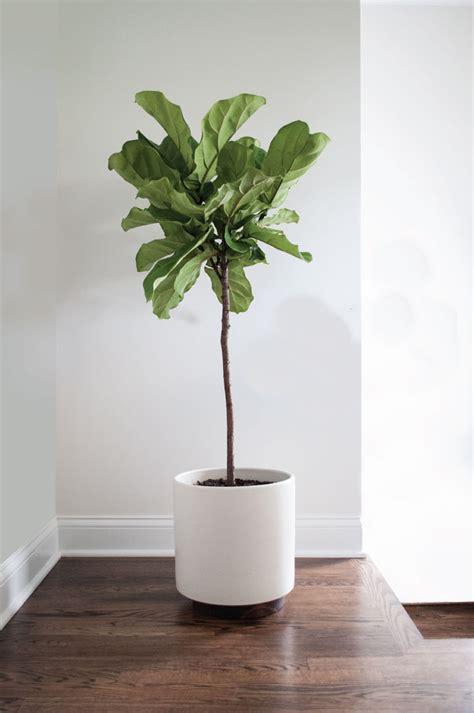 Study Planter by 5 Favourite Plant Vessels Bungalow5