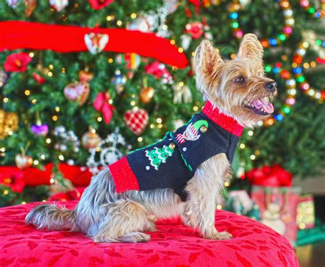sweater ideas for a sweater ideas for dogs