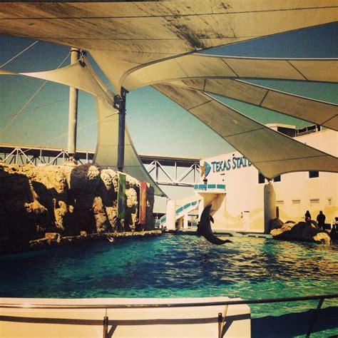 best fan for aquarium 72 best fan photos images on pinterest texas corpus
