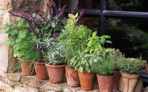 growing herbs thorny problems how can i grow herbs outside the kitchen