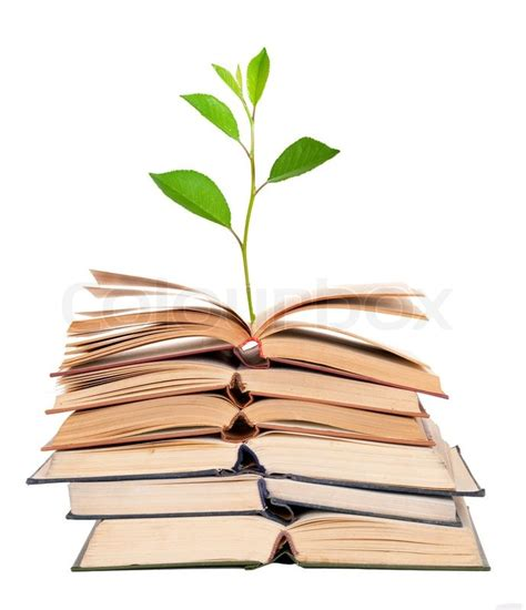 book images green sprout growing from open books stock photo colourbox