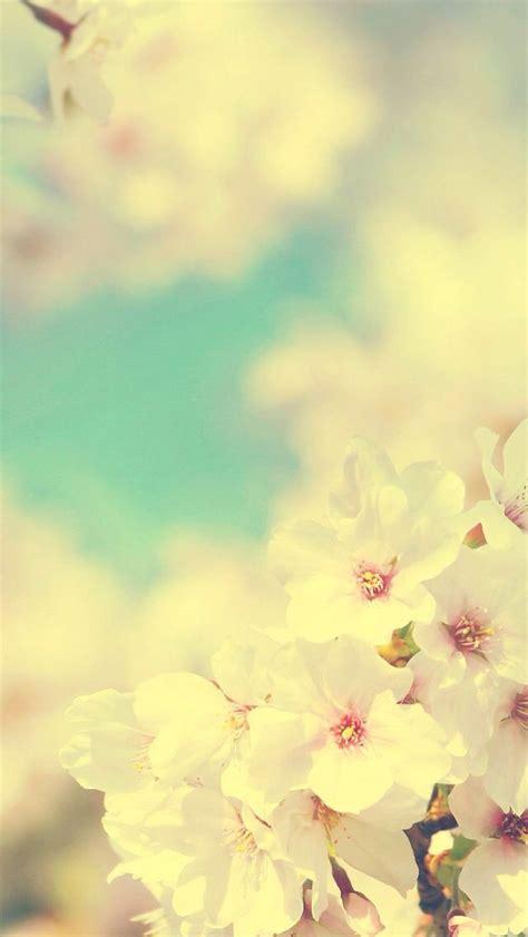 phone wallpaper wallpaper pinterest iphone wallpaper cherry blossom iphone wallpapers