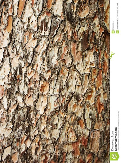 bark of pine stock images image 37225554