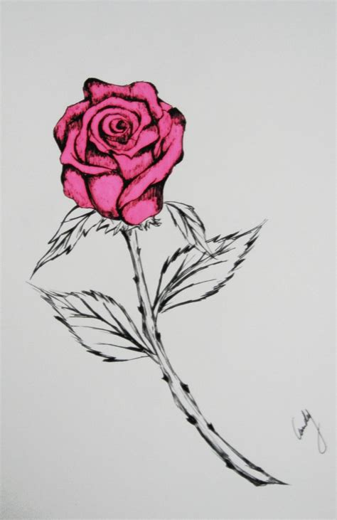 Drawing Roses by Drawing By Andy023 On Deviantart