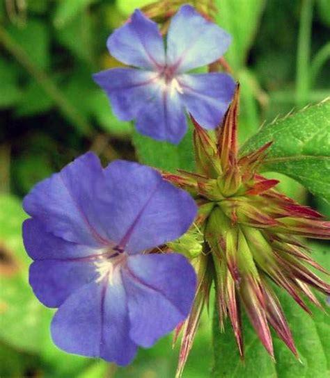 fiori bologna floriterapia rimedi floreali bach psicoterapeuta bologna