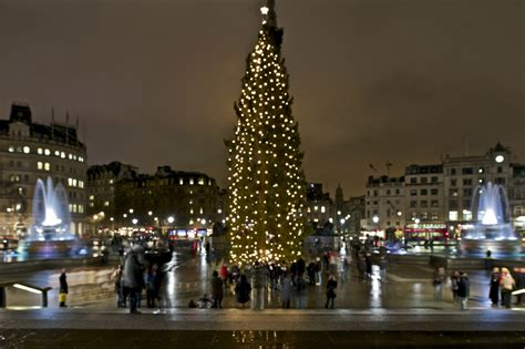 tree trafalgar square the tree lights at trafalgar square are due to