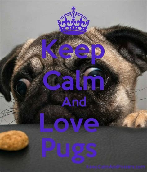 keeping pugs keep calm and pugs keep calm and posters generator maker for free