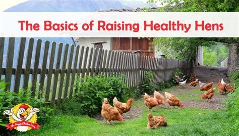 how to raise laying hens in your backyard how to raise laying hens in your backyard backyard