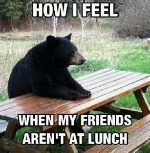 Bear At Picnic Table Meme - pin by natalie caples on funnies pinterest