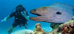 backup le tauchen image gallery moray eel attack