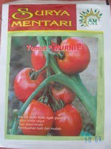 Bibit Bayam Cabut Unggul bibit tomat murni bibit unggul