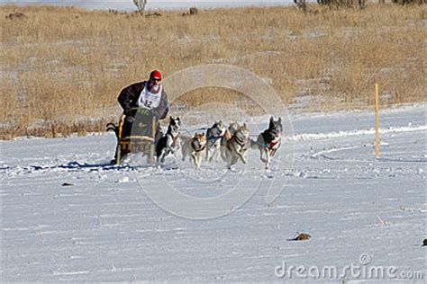 sled commands rocky mountain sled chionships competitor editorial photo image 37132971
