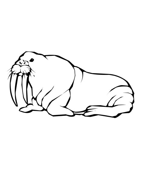 Marine Animal Coloring Pages Walrus Coloring Page