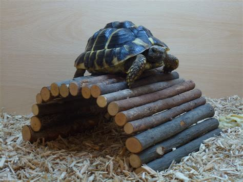Tortoise Bedding by Best Bedding For Small Animals Easibedding