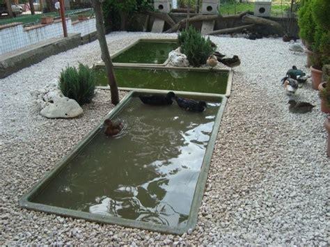 vasche laghetti da giardino vasche in vetroresina da giardino cocincina poultry