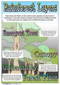 section 4 2 what shapes an ecosystem worksheet answers rainforest a collection of science and nature