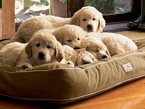llbean dog bed dog beds dog beds at l l bean