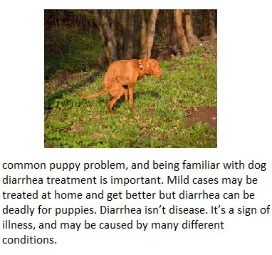 puppy diarrhea remedies management of liver cirrhosis