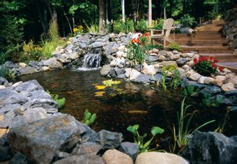 7 Ideas For Building A Koi Fish And Backyard Pond Home Diy Backyard Pond Ideas