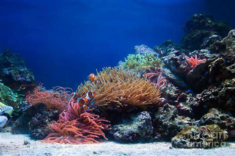 Duvet Cover Coral Underwater Life Photograph By Michal Bednarek