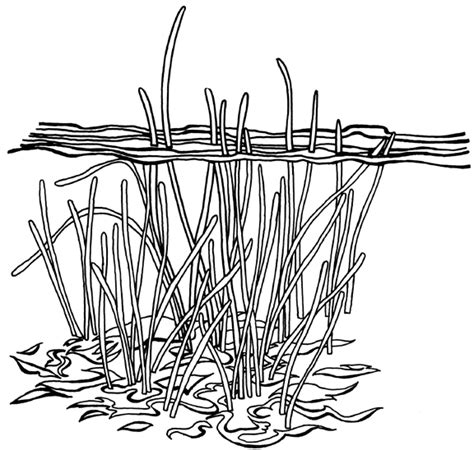underwater plants coloring pages underwater plant coloring coloring pages